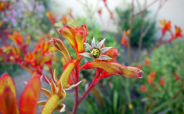 red-neon-flower