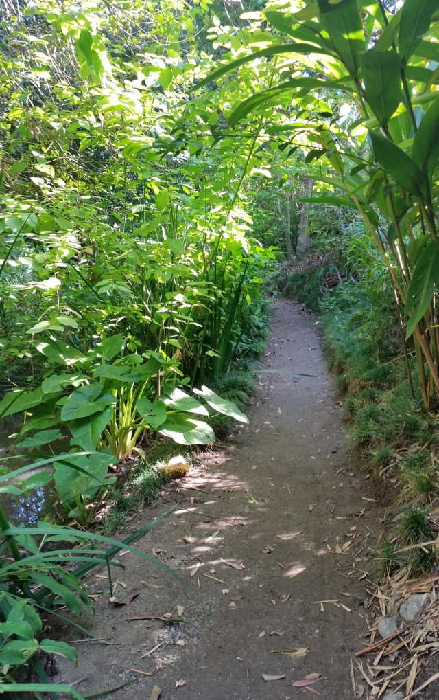 botanical-gardens-path