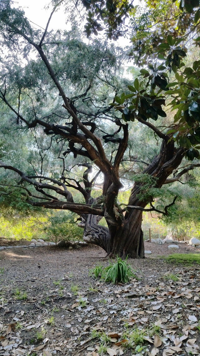 botanical-gardens-tree